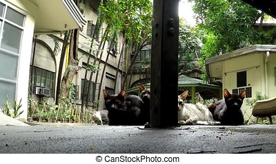 Stray cat Family at playground pavement - Stray cat Family...