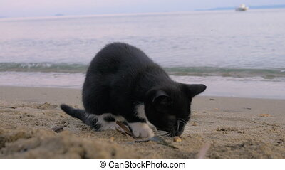 Stray cat found tasty fries at the beach - Hungry and...