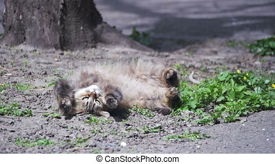 Stray Cat Lies on the Ground in the Park and is Sunbathing in the Sun. Slow Motion
