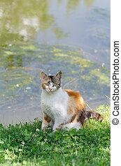 Stray cat looking at the camera.