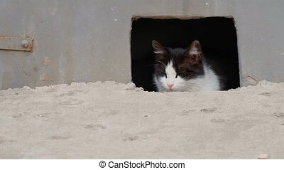 Stray Cat Looking Out Of Basement Hole In The Street