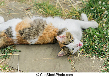 stray cat lying on the ground