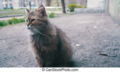Stray Cat on the Ground in the Park. Slow Motion