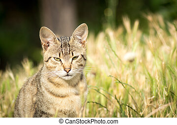 Stray cat sitting in the grass