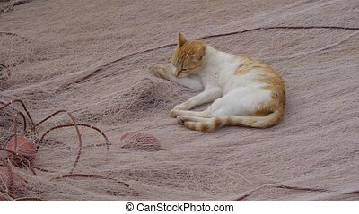 stray cat sitting on a fishing net
