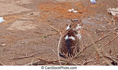 Stray cat sitting on bare ground then look back, copyspace