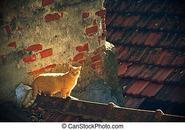 Stray yellow cat on rooftops of old houses