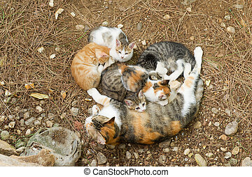 Stray cat with young kitten - Stray cat outdoor in nature ...