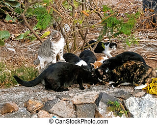 stray little cats feeding from pet food from caring people, on the road