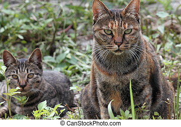 Stray cats - I took a picture I have found a stray cat of 2 ...