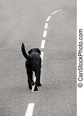 stray dog - A dog walking on the road.
