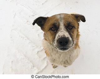 stray dog asks for food