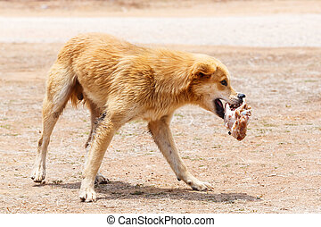 Close up dirty stray dog hold the bone in mouth