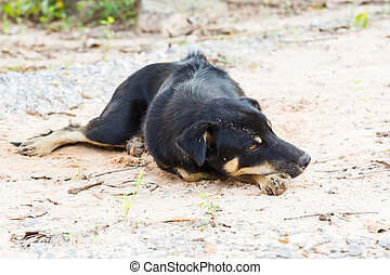 Close up Thai stray dog lying on dirty sandy floor