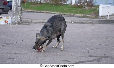 stray dog eating a piece of meat with bone outdoor