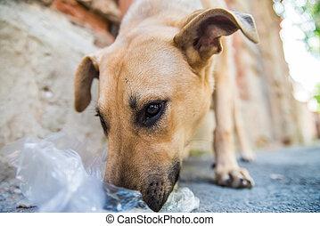 Stray dog eats junk