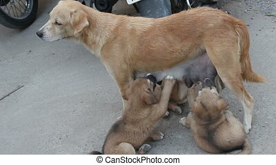 stray dog feeding ??puppies on the street