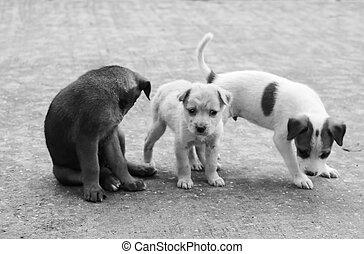 Stray dog hungry food