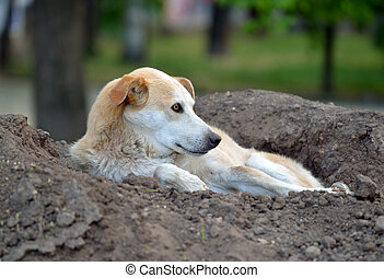 Stray dog lying on a pile of soil