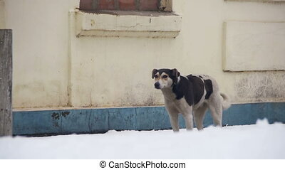 Stray Dog on a Snowy Street in Winter. Slow Motion