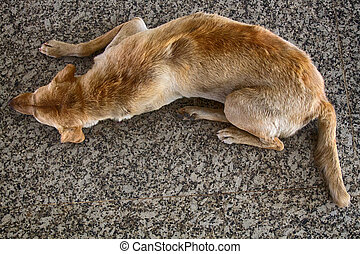 Stray dog on pavement, top view. Rescue and shelters for ...