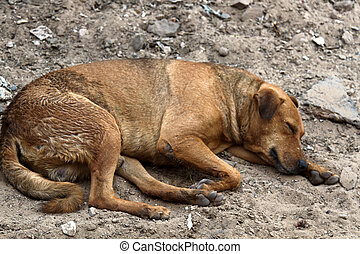 Stray dog on pavement, top view - Stray dog on ground, top ...