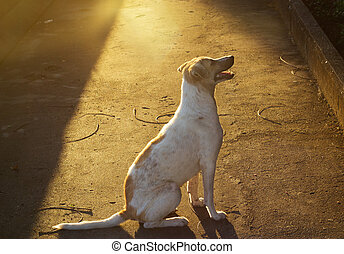 stray dog on street in vibrant light