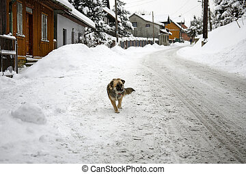 stray dog on the empty road in the village during snowstorm