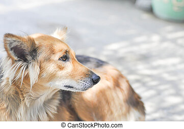 stray dog, half breed dog or mongrel dog