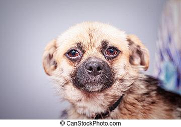 stray dog portrait