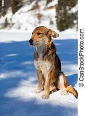 Portrait of a stray dog in the snow