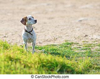 Stray Dog - Portrait Of Homelessness Sad Dog