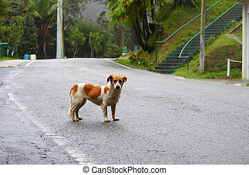 A lonely stray dog wanders the streets of central Puerto Rico.