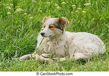 Stray dog resting in spring grass