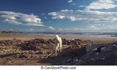 Stray dog rummaging through garbage heap on beach near sea....