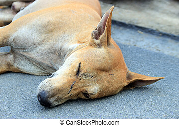close up face of stray dog sleep on ground