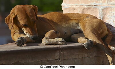 Stray dog. - Stray dog lying in the sun and washing itself.