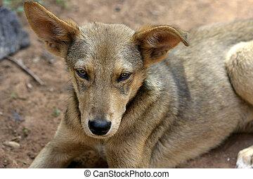 Stray Dog - Wild African Dog