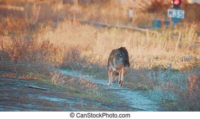 stray dog winter runs. the problem of stray animals. the dog...