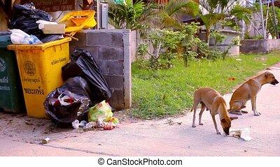 Stray dogs eat the scum around garbage bins.