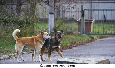 Stray Dogs on the Street. Slow Motion