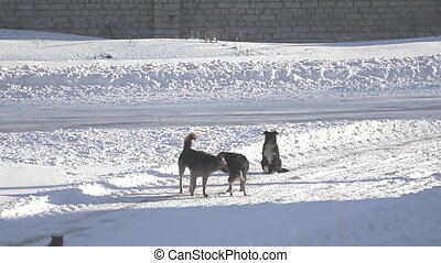 Stray dogs on winter road