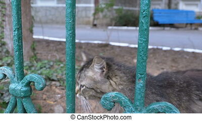 Stray gray cat walks in the park outside the fence and...