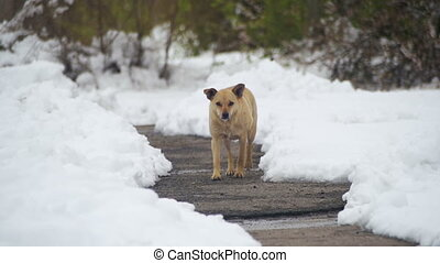Stray Grey Dog on a Snowy Street in Winter. Slow Motion
