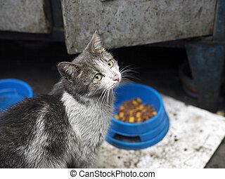 Stray Hungry Cat
