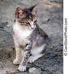 Stray Kitten - Stray kitten one of many on Virginia Key in ...