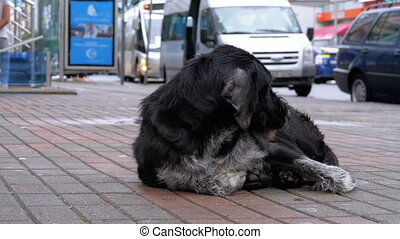 Stray Shaggy Dog lies on a City Street against the...