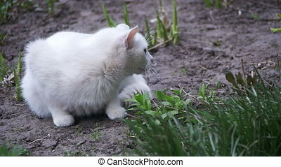 Stray White Cat on the Ground in the City Park. Slow Motion...
