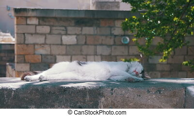 Stray White Cat Sleeps on the Street