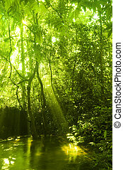 stream., зеленый, лес